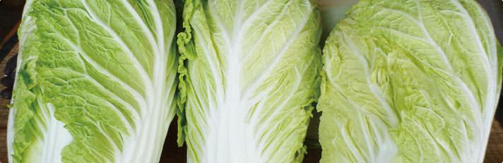 雪囲い白菜